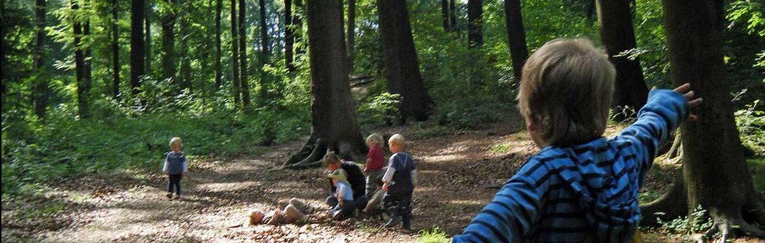 Waldgruppen | Weidenwuseln | Seitenheader