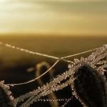 Winter|Natur|Seitenheader