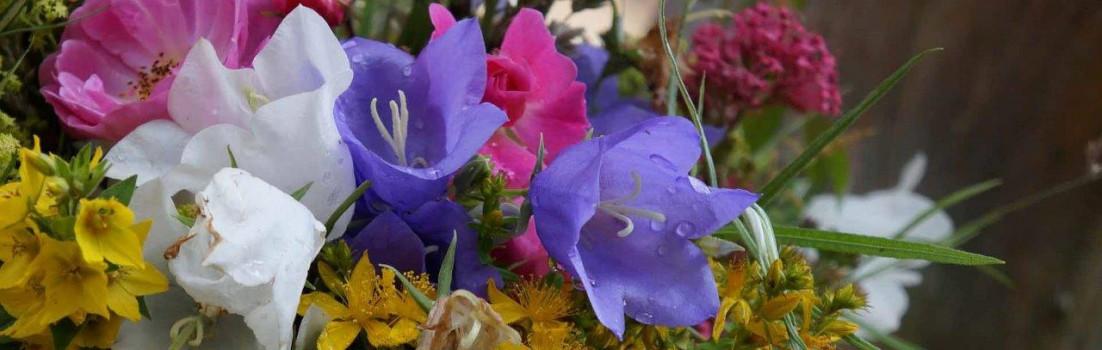 Blumen | Seitenheader
