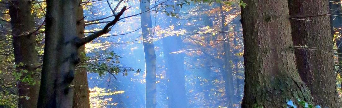 Ferien | Herbst | Seitenheader