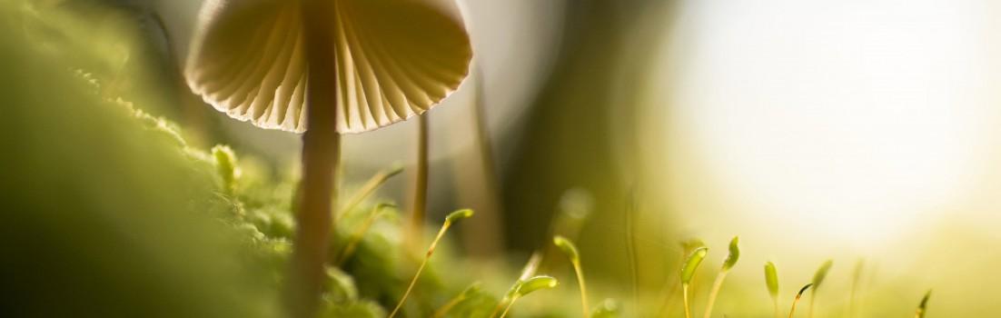 Hintergrund | Pilz
