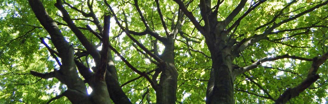 Sommer|Baum|Seitenheader