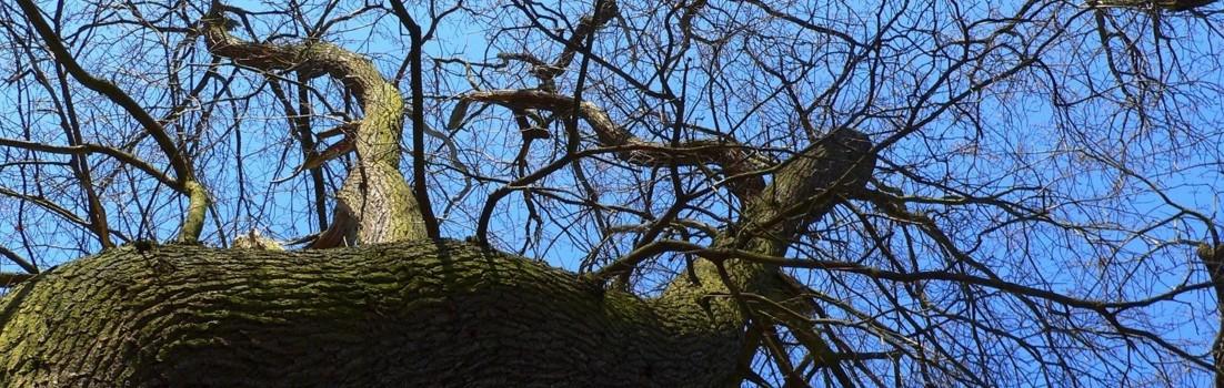 Winter|Baum|Seitenheader