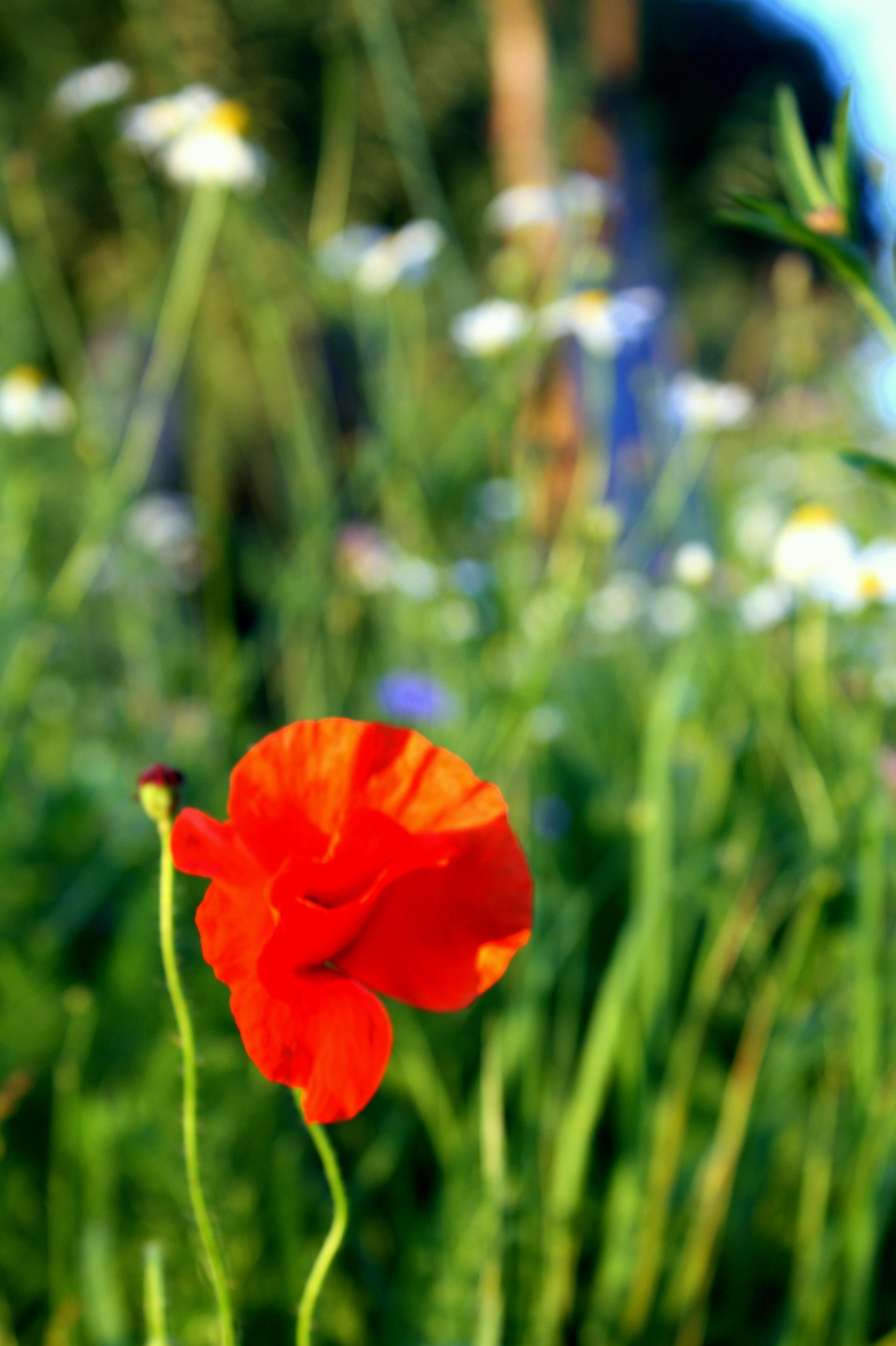 Blumen|Zauberwaldgarten|Impressionen