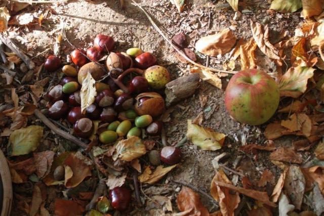 Herbstimpressione|ApfelLaubKastanien