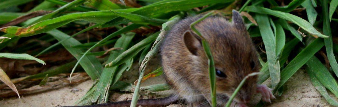 Tiere|Sommer|Zauberwaldgarten