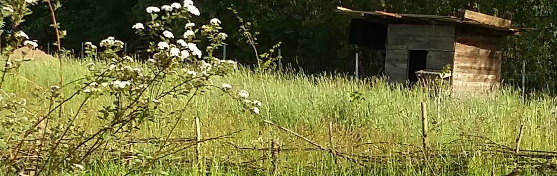 Schafstall|Zauberwaldgarten|Frühling