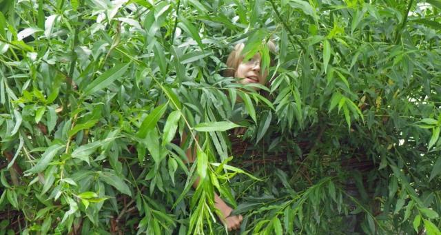 Weiden|Kind|Sommer
