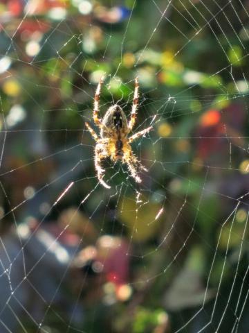 Spinne im Herbst