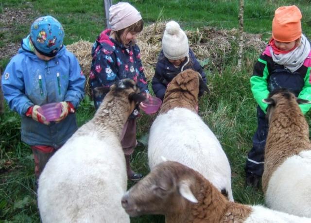 Schafe2,Kinder,Ferien
