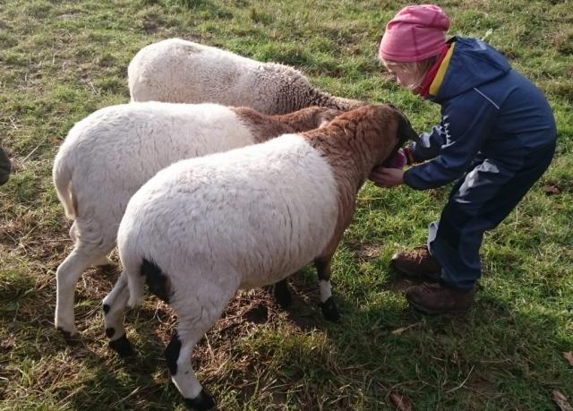 Schafe,Kinder,Ferien
