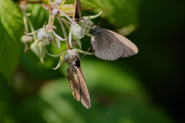 Schmetterlinge,Natur