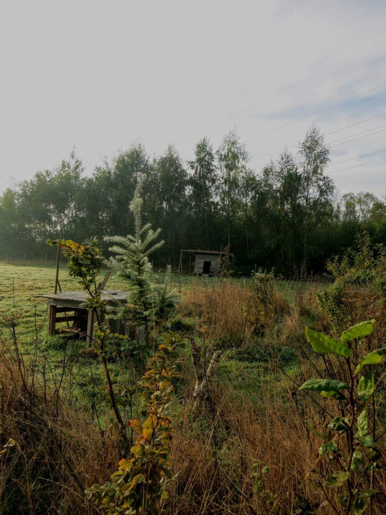 Zauberwaldgarten,Impressionen