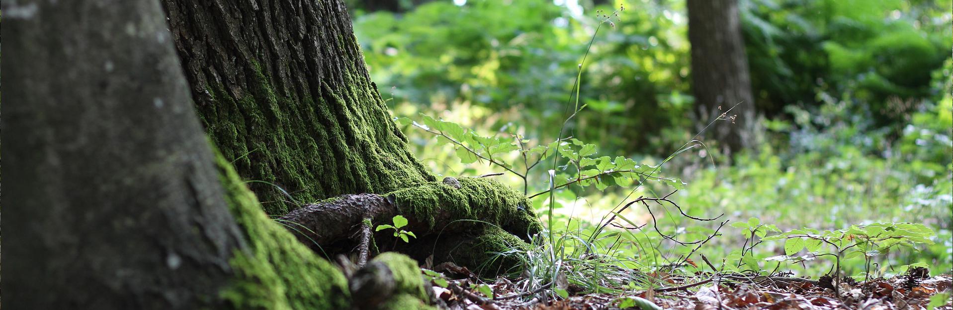 Waldbaden,Seitenheader